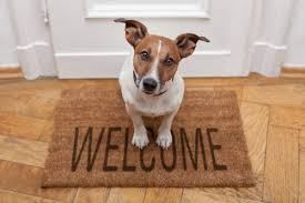 dog waiting in front of house on welcome mat